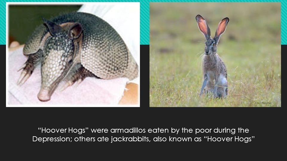 Image result for hoover hogs