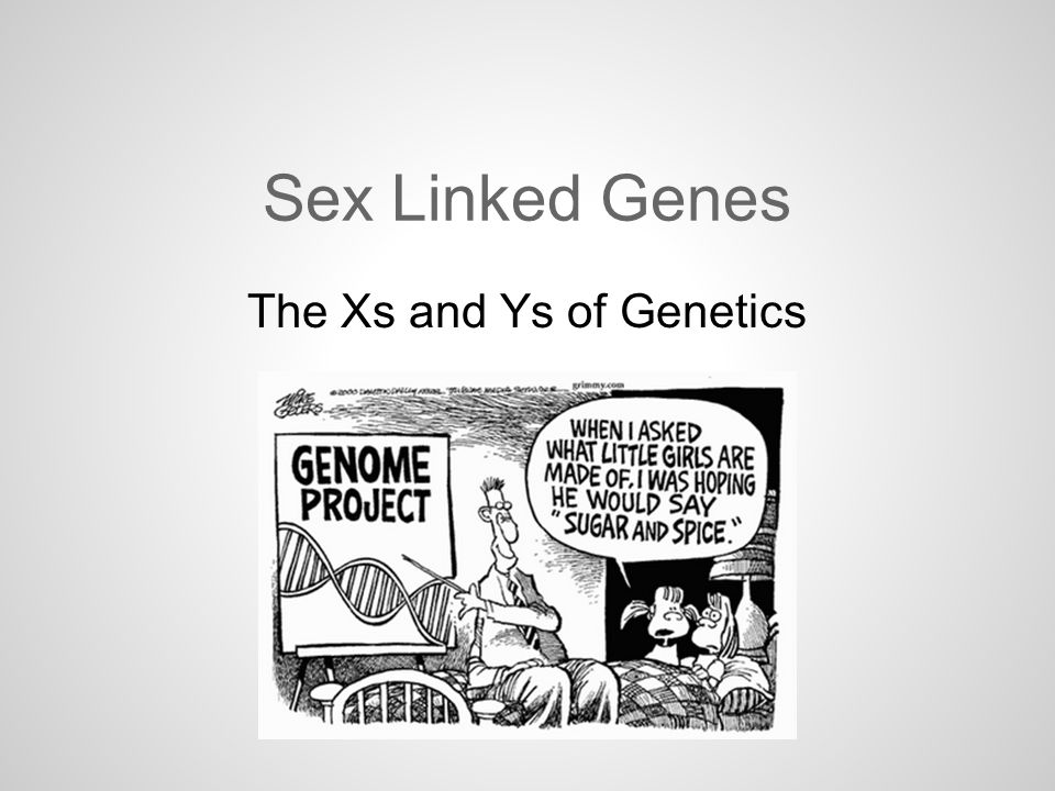 Sex Linked Genes The Xs and Ys of Genetics Sex Linked Genes There – Genetics X Linked Genes Worksheet