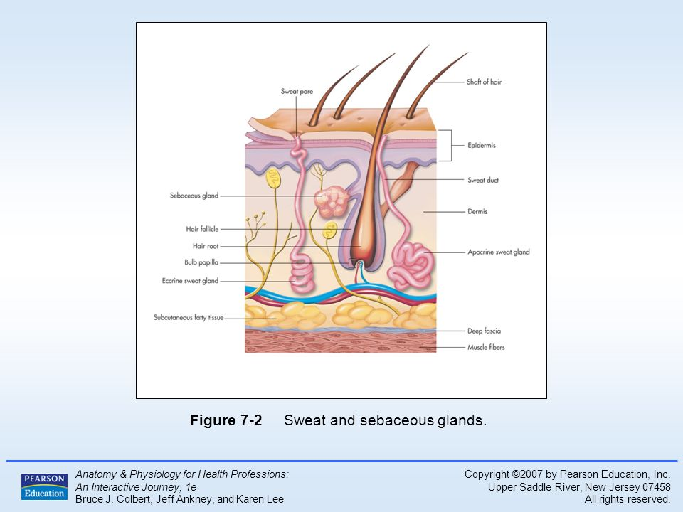 Atractivo Anatomy And Physiology For Health Professions Friso ...