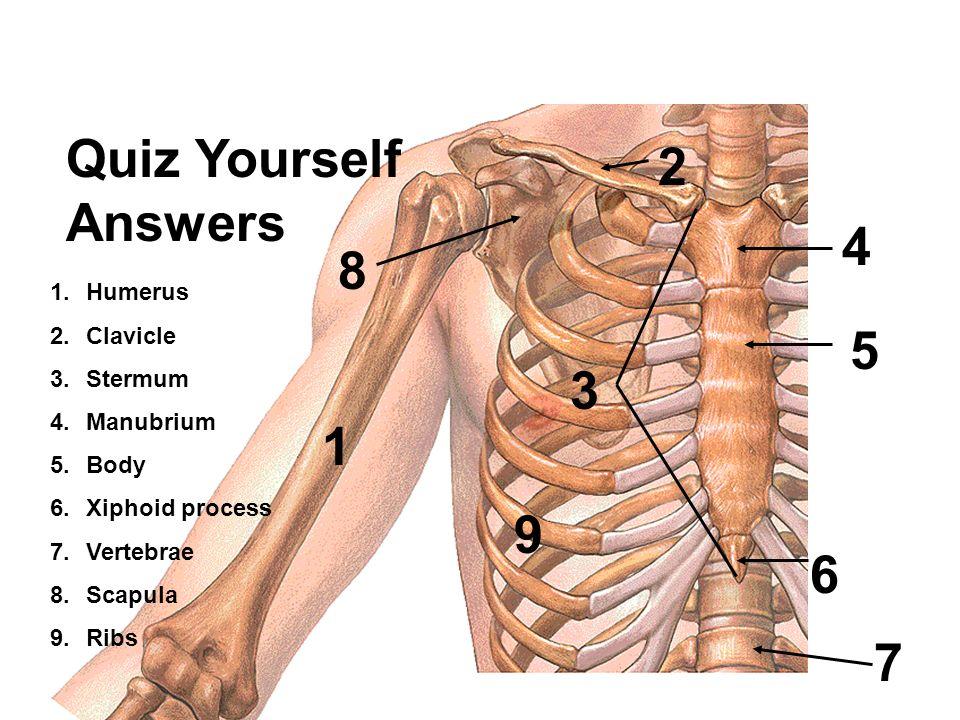 Großzügig Anatomie Und Physiologie Abschließende überprüfung Fotos ...