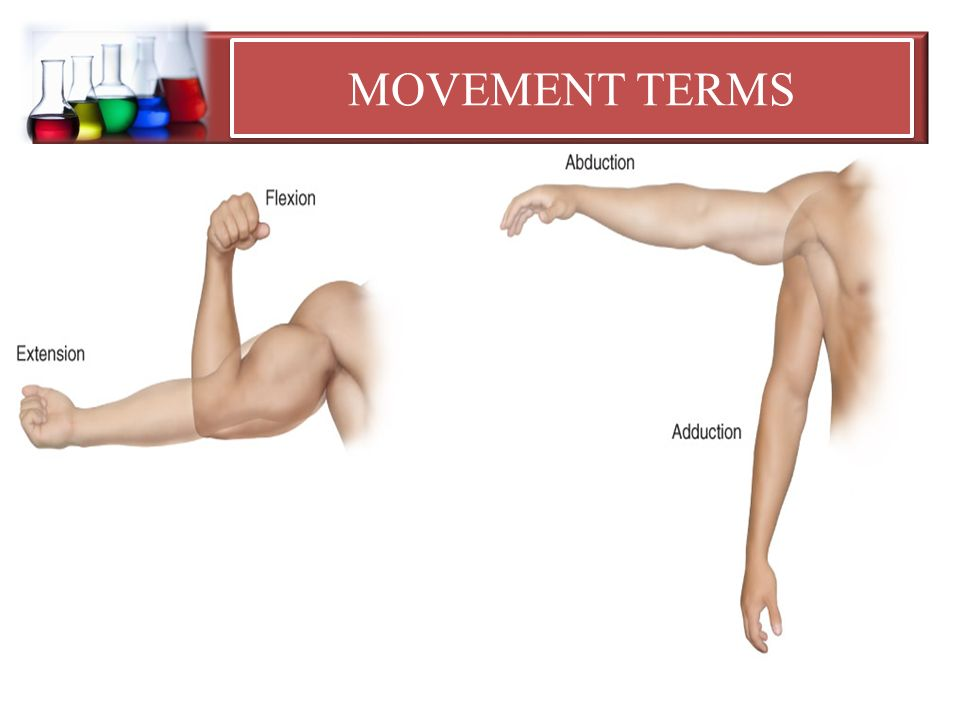 Anatomical Terms of Movement YouTube - dinosauriens.info