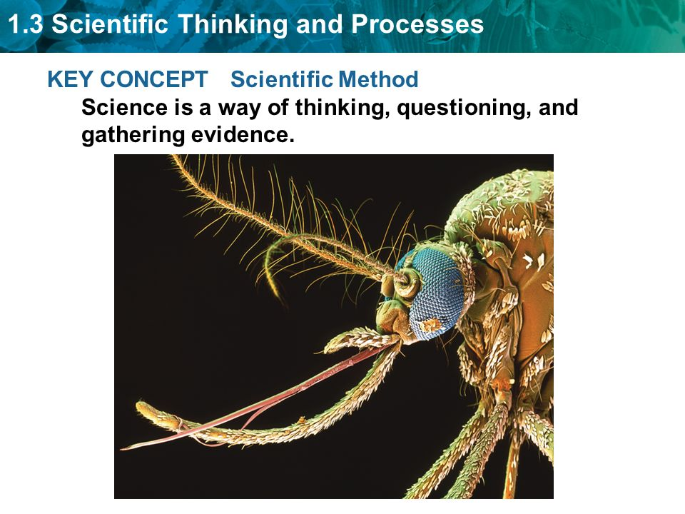 1.3 Scientific Thinking and Processes KEY CONCEPT Scientific Method Science is a way of thinking, questioning, and gathering evidence.
