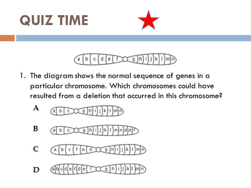 Worksheets Chromosome Worksheet chromosome mutation worksheet sharebrowse collection of sharebrowse