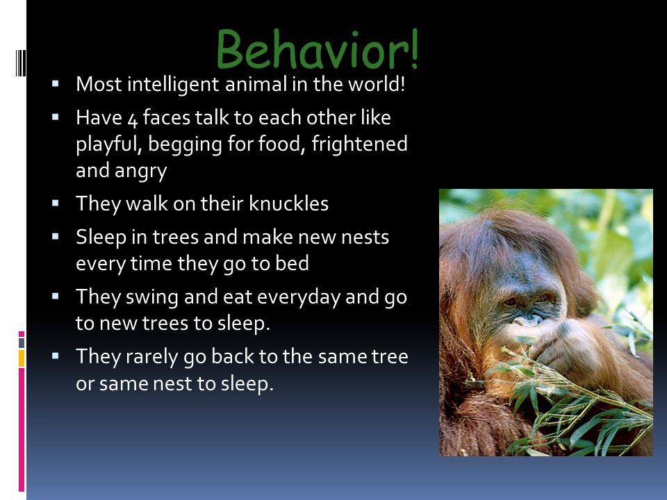 Behavior.  Most intelligent animal in the world.