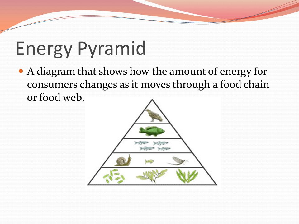 Energy Pyramid A diagram that shows how the amount of energy for consumers changes as it moves through a food chain or food web.