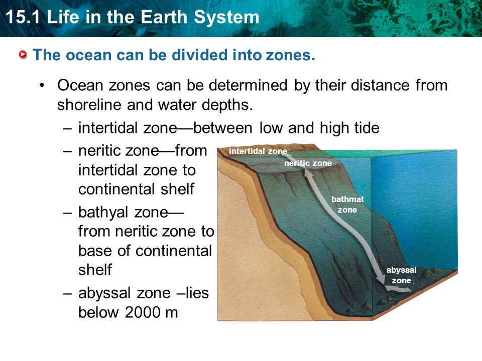 Climate change on neritic zone?