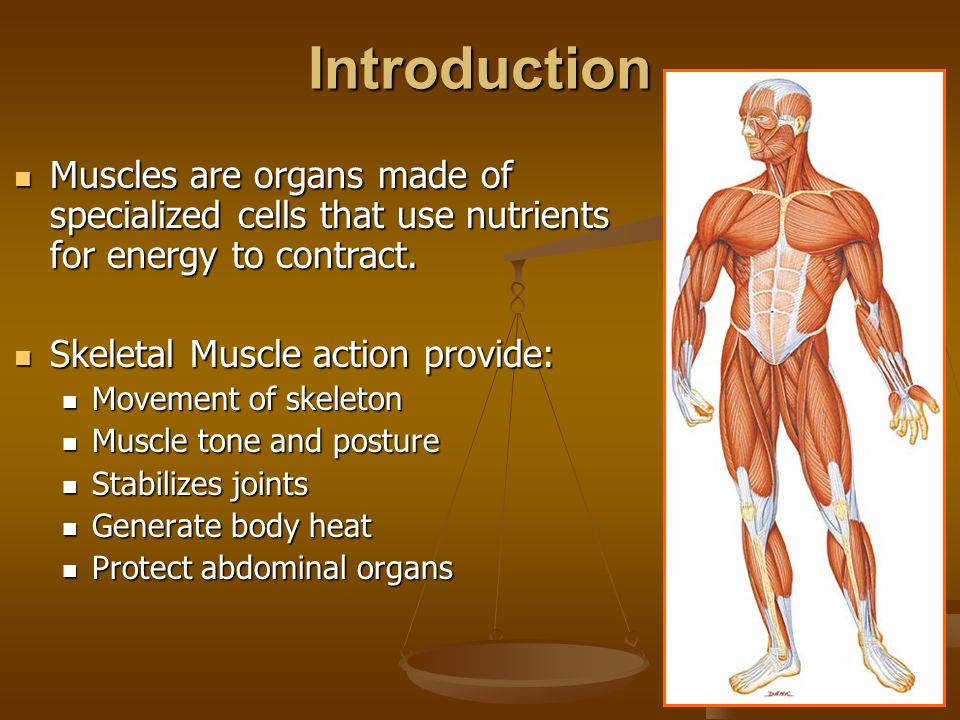 Muscular System Honors Anatomy & Physiology. Skeletal, Smooth, or ...
