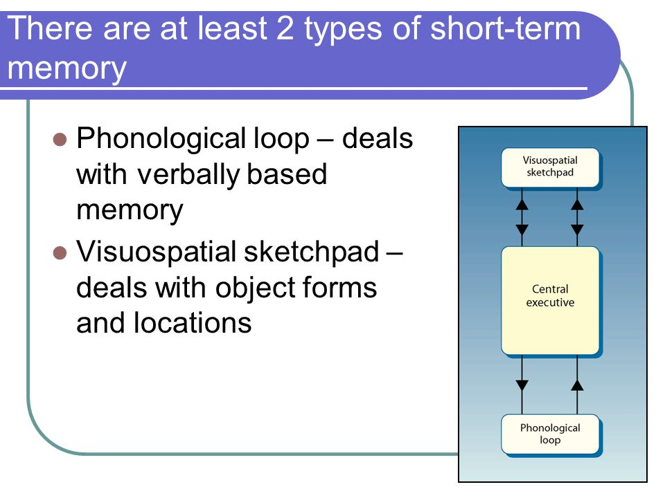 16 There are at least 2 types of short-term memory Phonological loop – deals with verbally based memory Visuospatial sketchpad – deals with object forms and locations