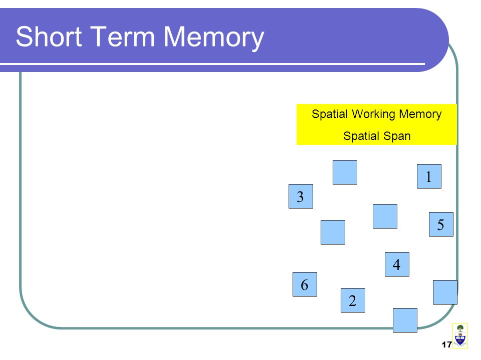 17 Short Term Memory Spatial Working Memory Spatial Span