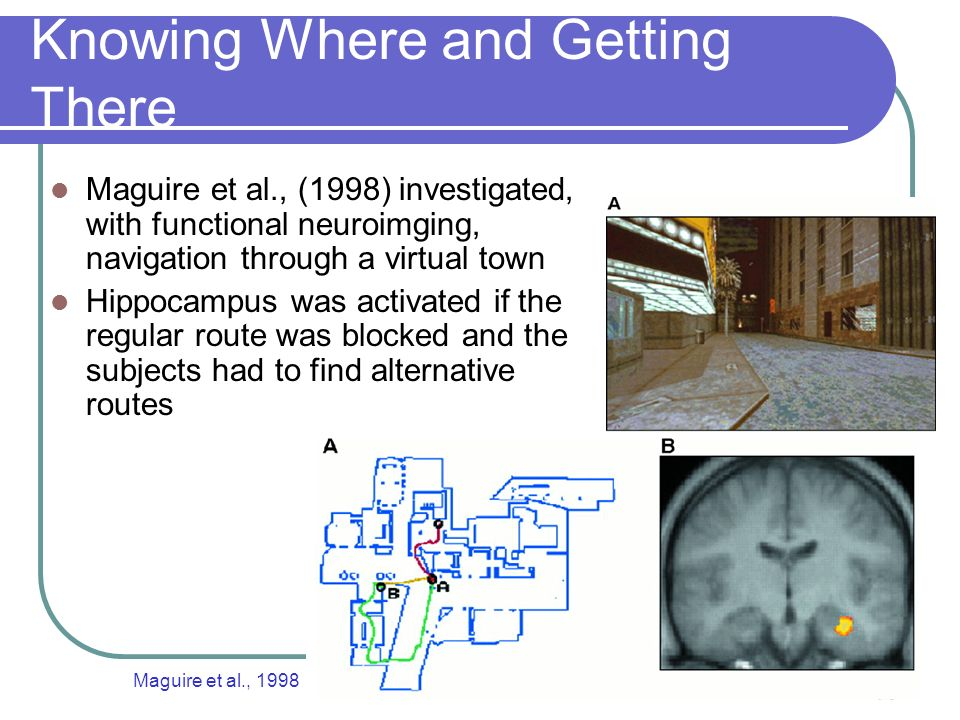 43 Knowing Where and Getting There Maguire et al., (1998) investigated, with functional neuroimging, navigation through a virtual town Hippocampus was activated if the regular route was blocked and the subjects had to find alternative routes Maguire et al., 1998