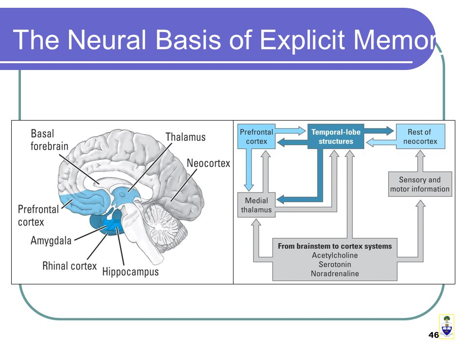 46 The Neural Basis of Explicit Memory