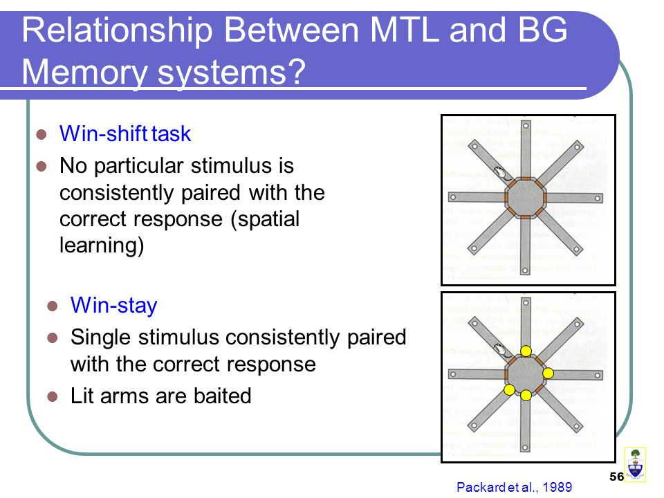 56 Relationship Between MTL and BG Memory systems.