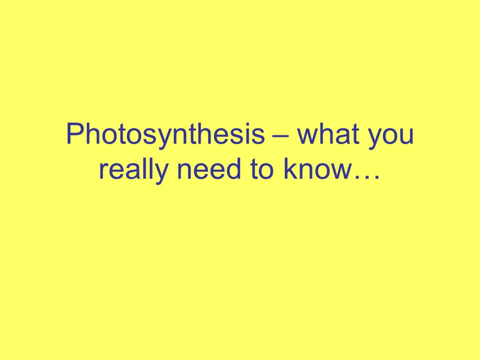 Photosynthesis What You Really Need To Know Warm Up 1 1ve An