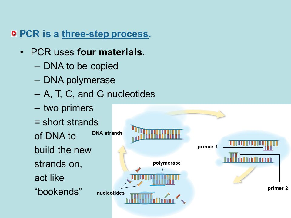PCR is a three-step process. PCR uses four materials.