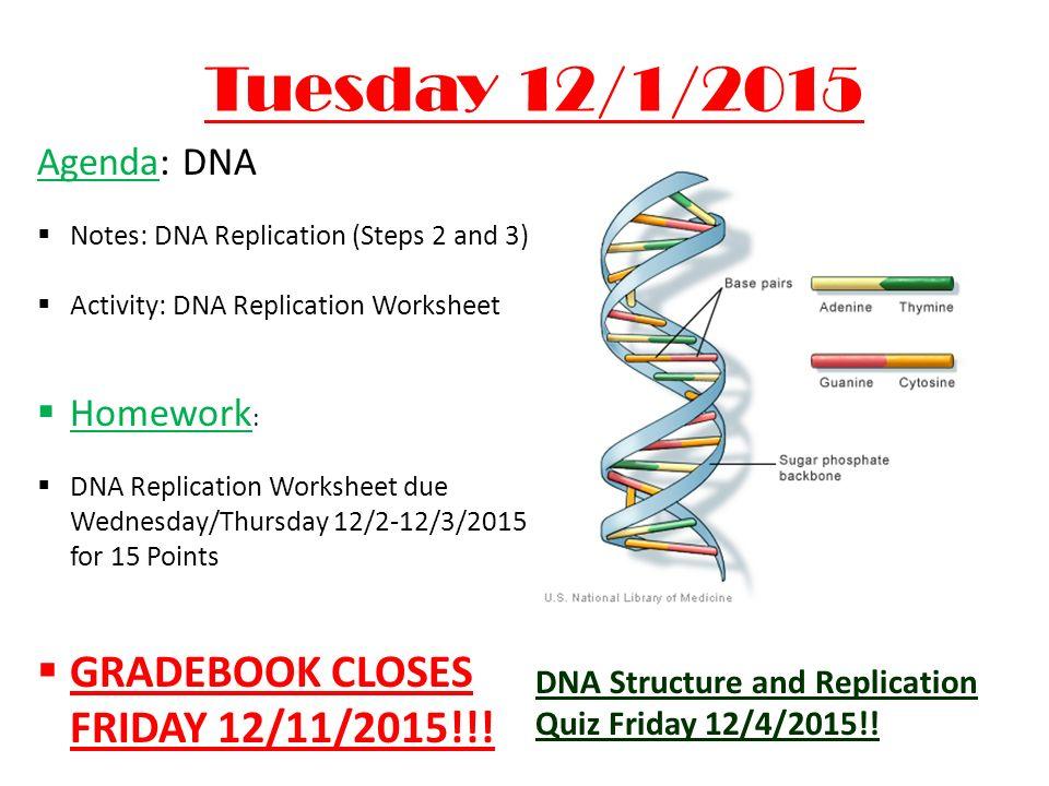 Dna replication worksheet the big idea