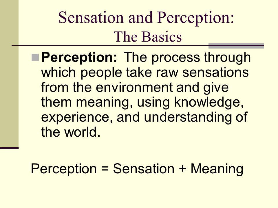 sensation and perception worksheet
