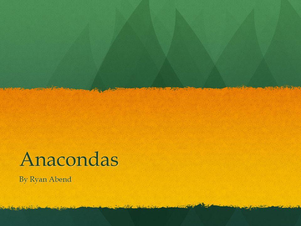 Anacondas By Ryan Abend
