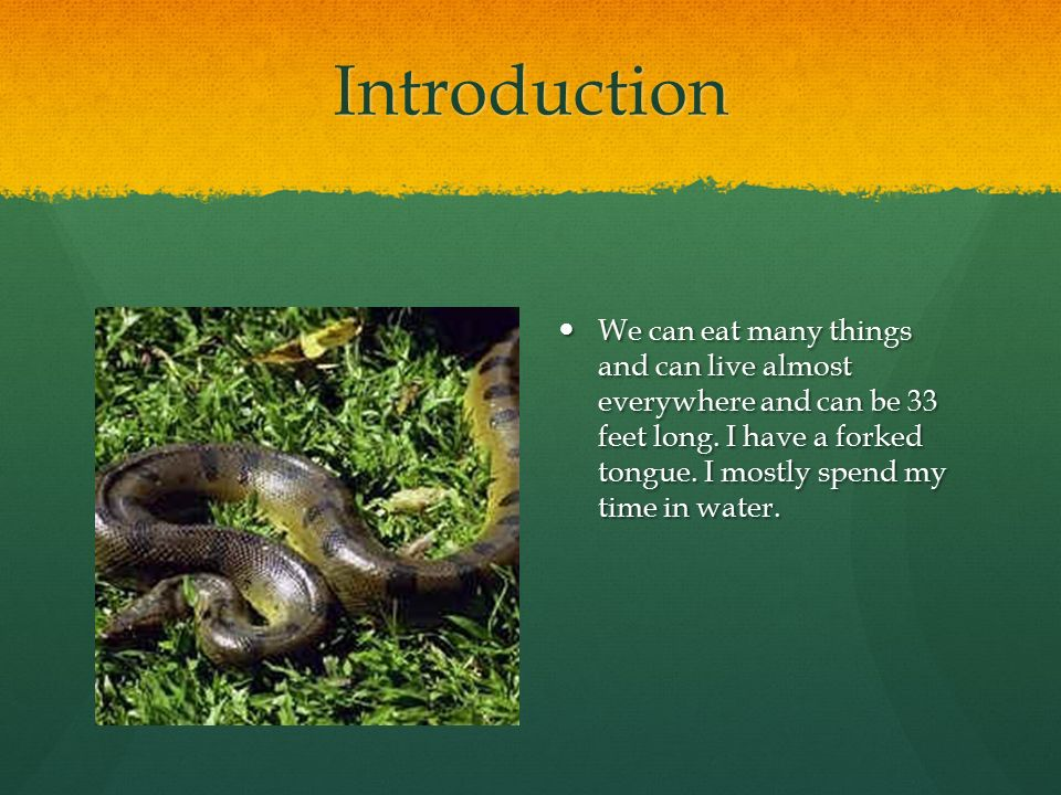 Introduction We can eat many things and can live almost everywhere and can be 33 feet long.