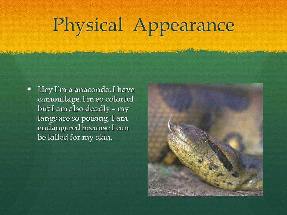 Physical Appearance Hey I'm a anaconda.I have camouflage.