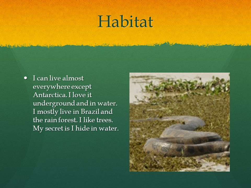Habitat I can live almost everywhere except Antarctica.