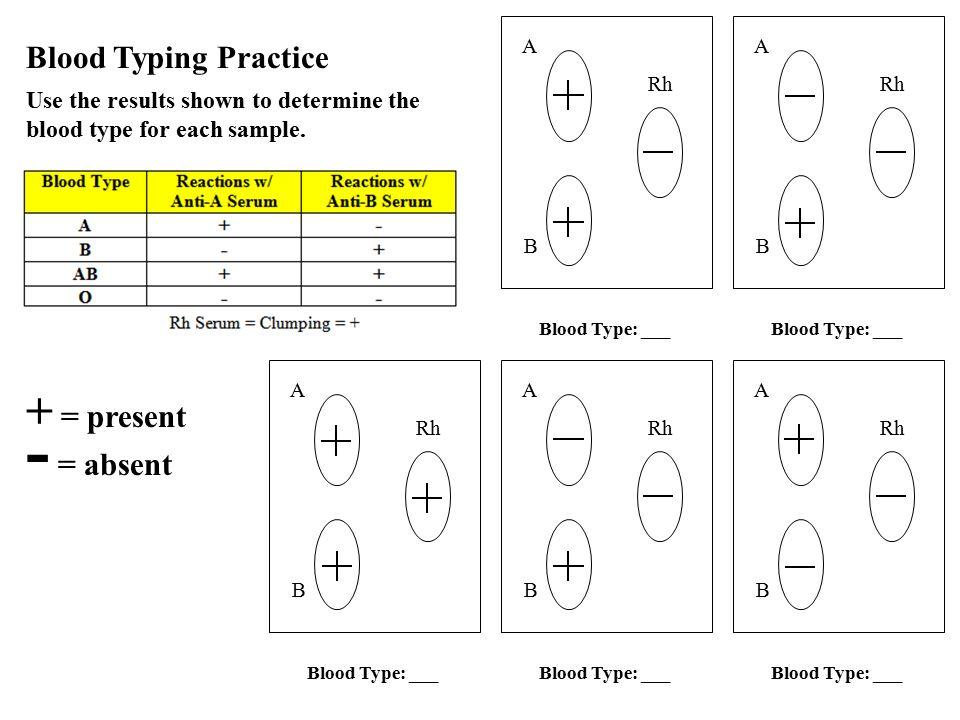 Codominance Worksheet Blood Types Key 9861146 Virtualdirfo