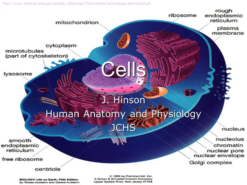 Cells J. Hinson Human Anatomy and Physiology JCHS - ppt download