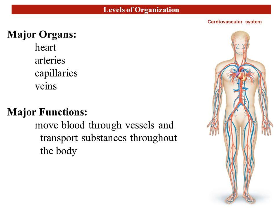 Ziemlich Introduction To Anatomy And Physiology Ppt Bilder ...