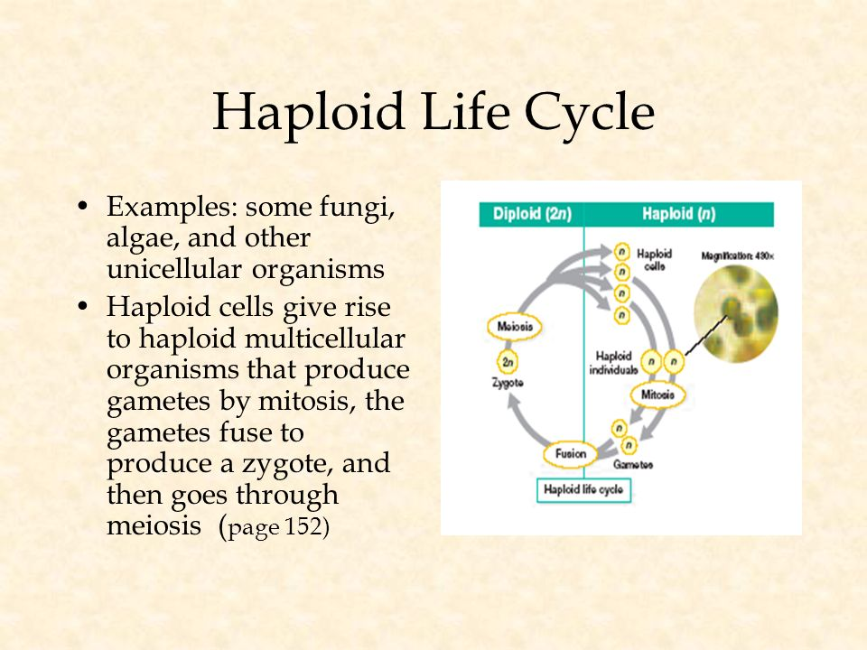 Meiosis and Sexual Reproduction Section 1 Section 2 Meiosis Sexual ...
