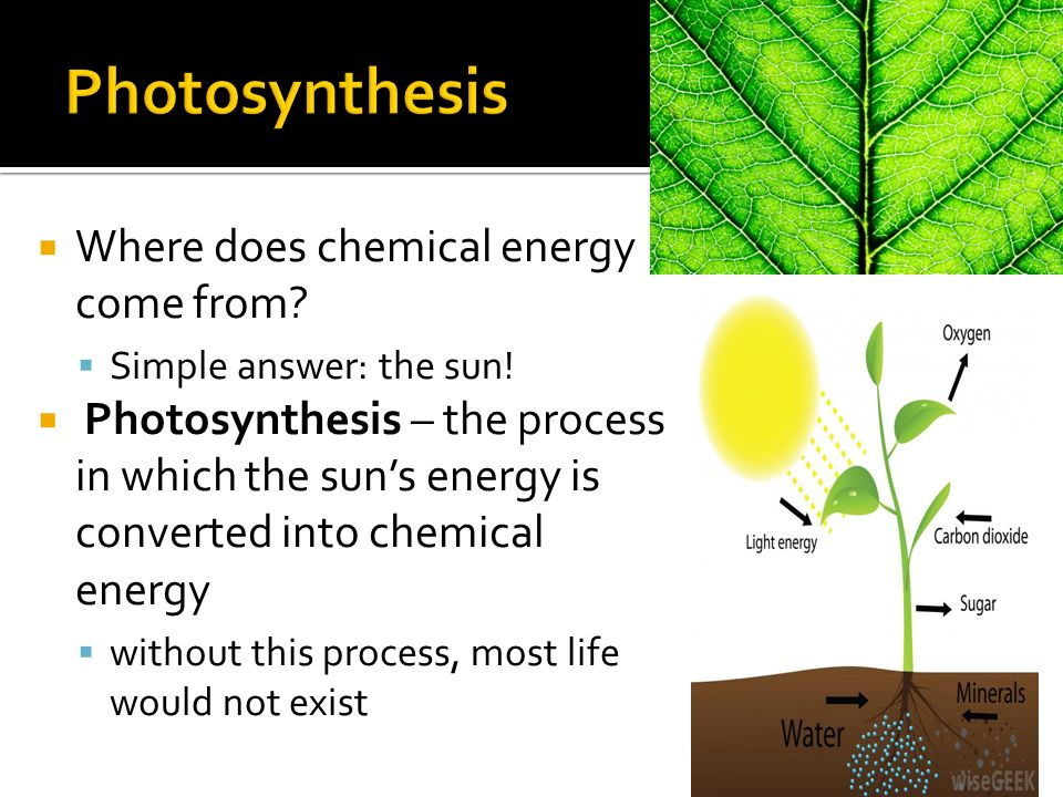 Chapter 2.4.  All organisms require energy to stay alive and ...