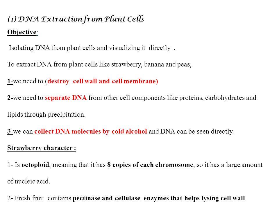dna experiments essay