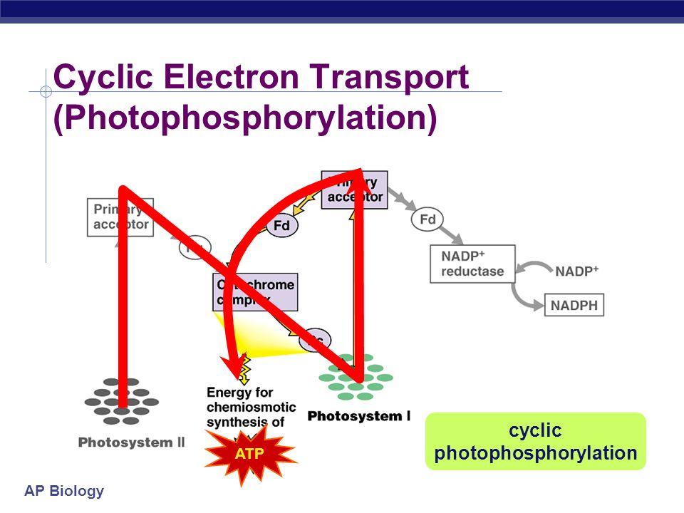 biology cycles essay