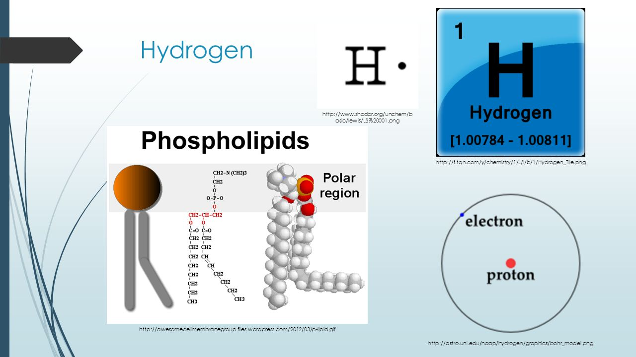 explanations major elements oxygen carbon hydrogen nitroge