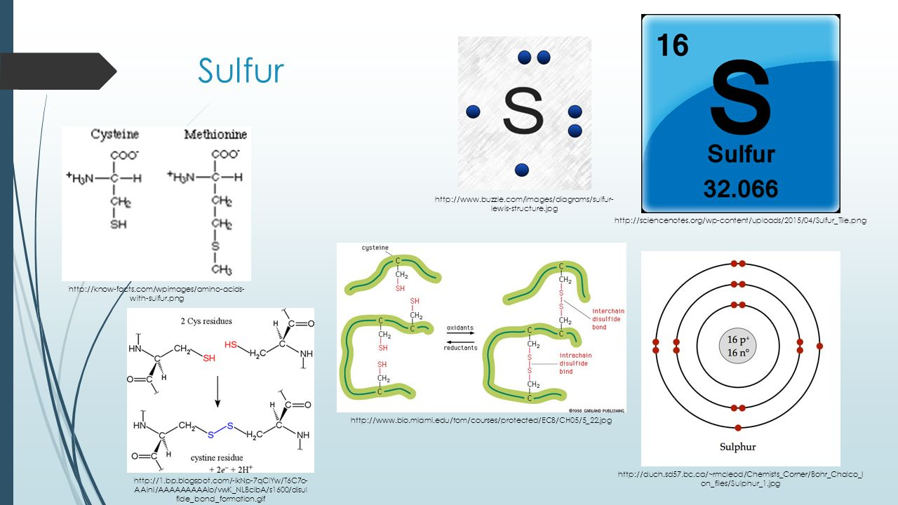 Standard ii objective 1 a list the major chemicals in cells 23 sulfur pooptronica Gallery