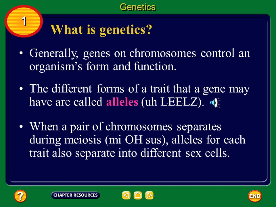 Chapter: Heredity Table of Contents Section 3 ...