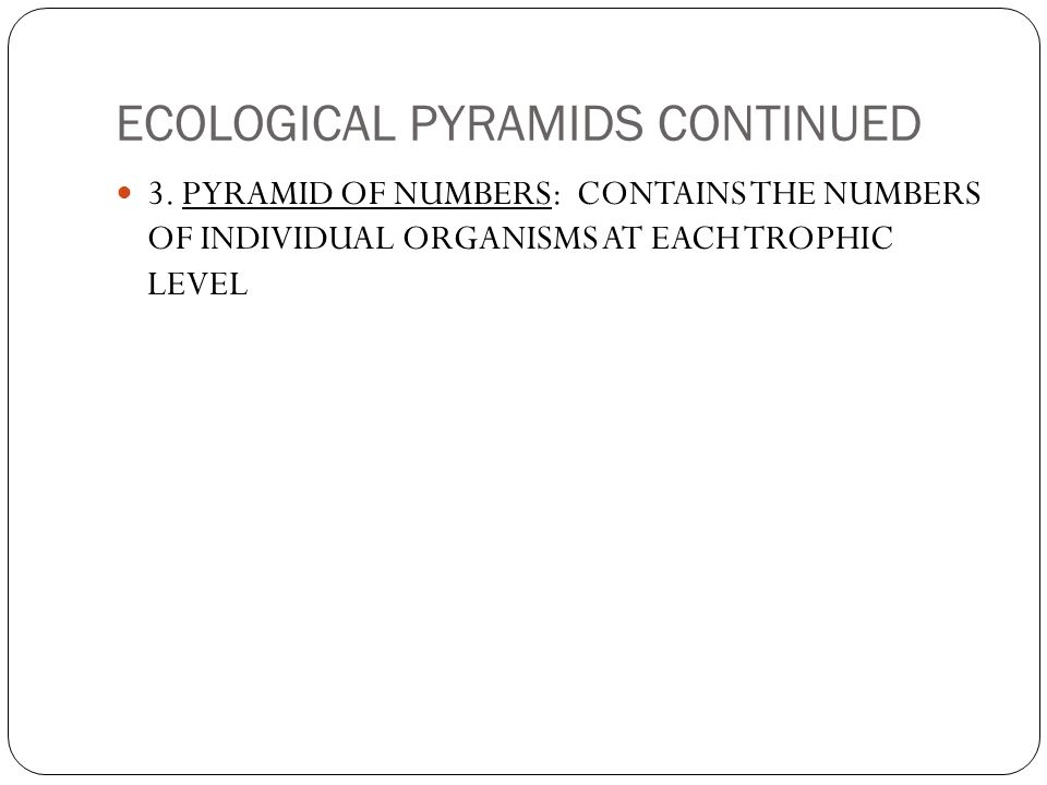 THE BIOSPHERE COLLEGE PREP BIOLOGY CHAPTER WHAT IS ECOLOGY ECOLOGY – Ecological Pyramids Worksheet