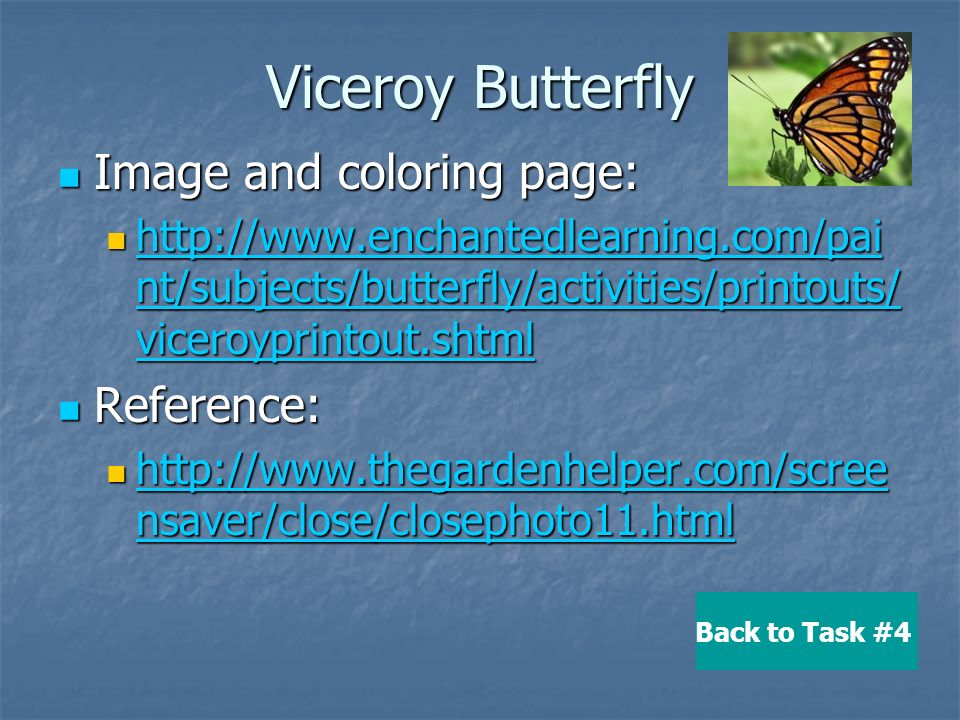 13 Viceroy Butterfly Image And Coloring Page