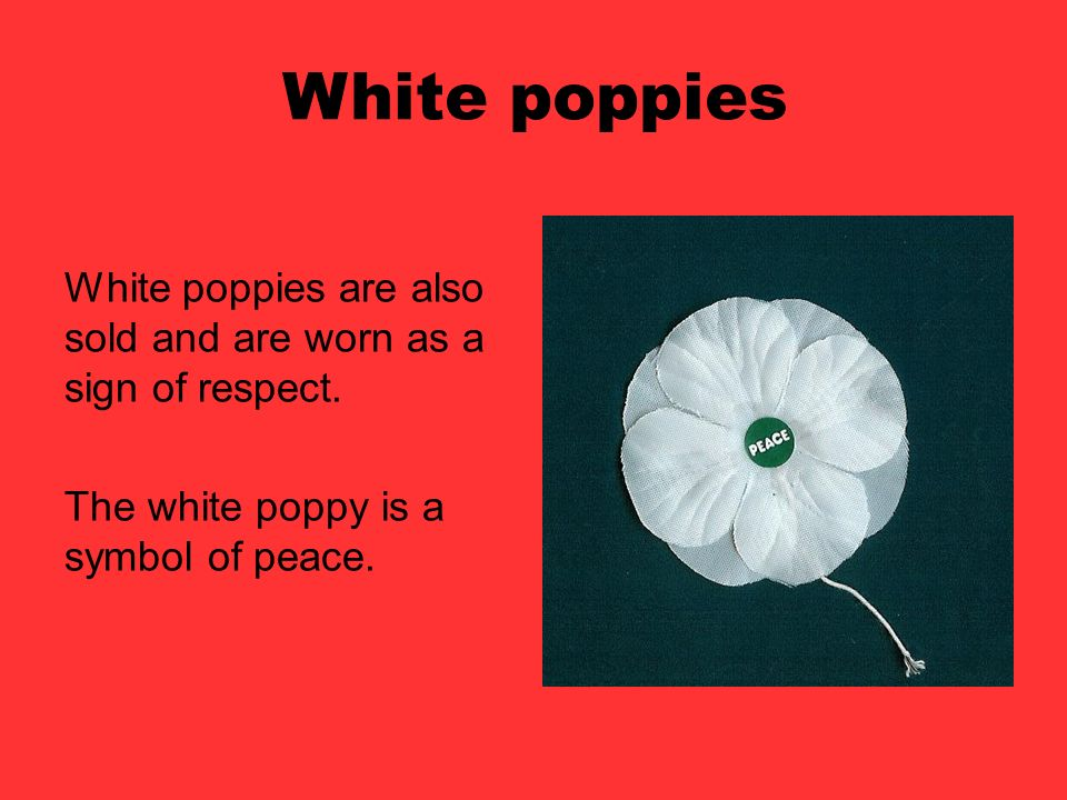 White poppies White poppies are also sold and are worn as a sign of respect.