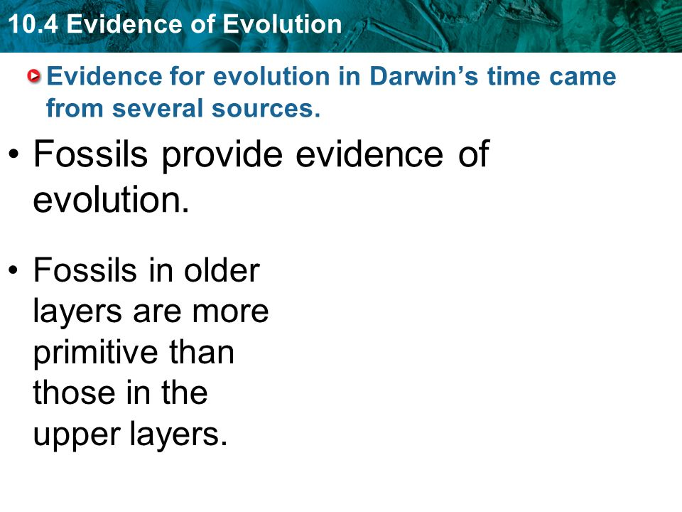 10.4 Evidence of Evolution Evidence for evolution in Darwin's time came from several sources.