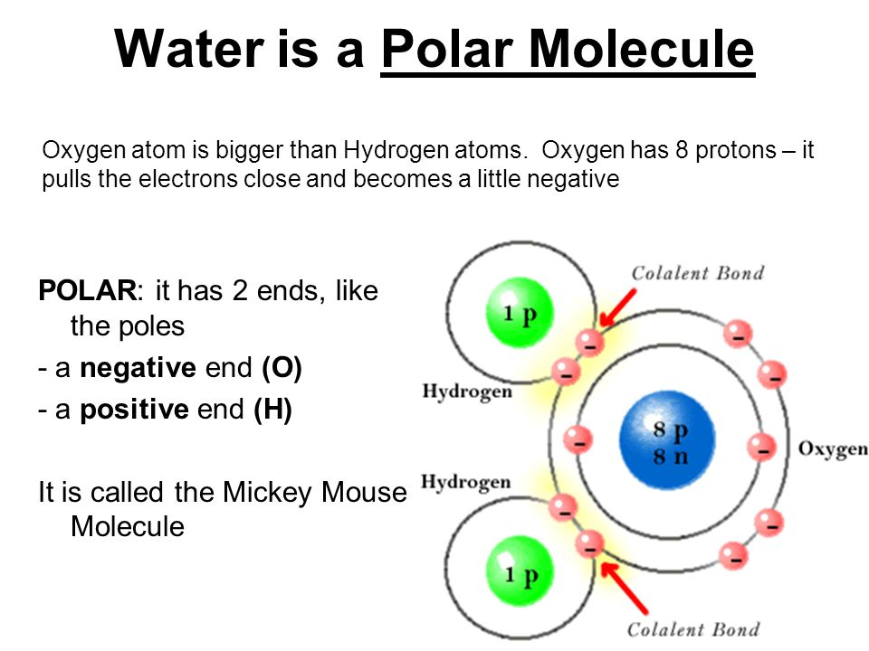 Why does this hurt water h 2 o oxygen and hydrogen are bonded water is a polar molecule oxygen atom is bigger than hydrogen atoms sciox Gallery