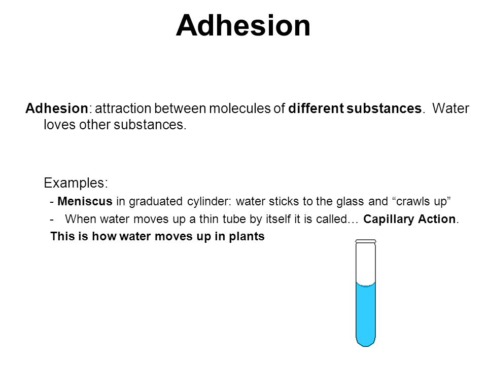 Adhesion Adhesion: attraction between molecules of different substances.