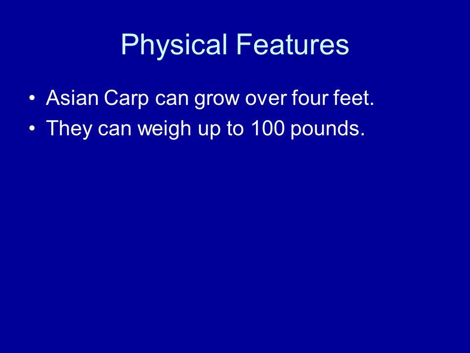 Asian carp physical descripation