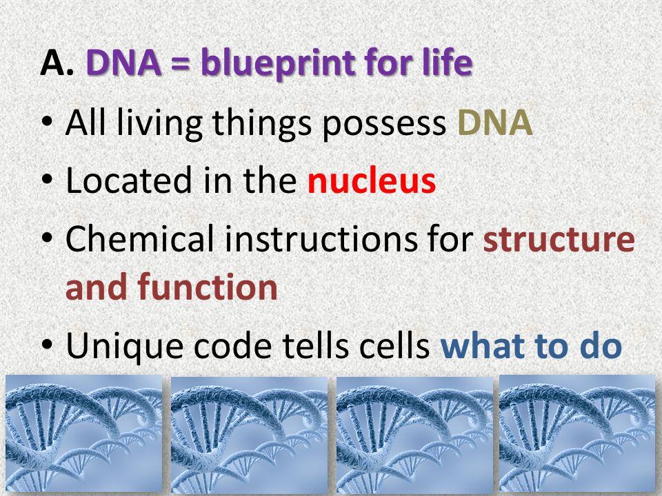 Dna structure unit 2 1 notes mr hefti pulaski biology unit 2 1 4 dna blueprint for life malvernweather Images