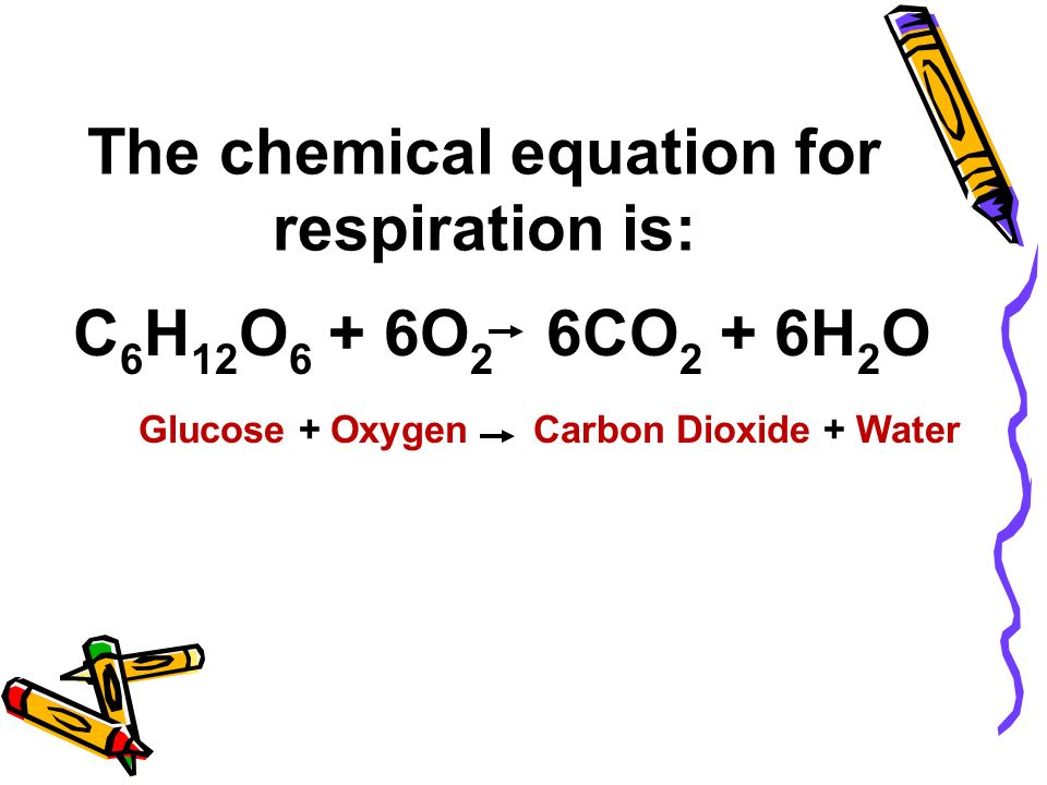 What Is The Chemical Equation For Respiration - Jennarocca