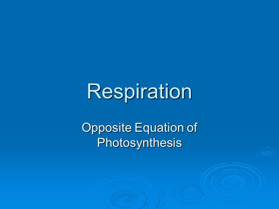 Respiration Opposite Equation of Photosynthesis