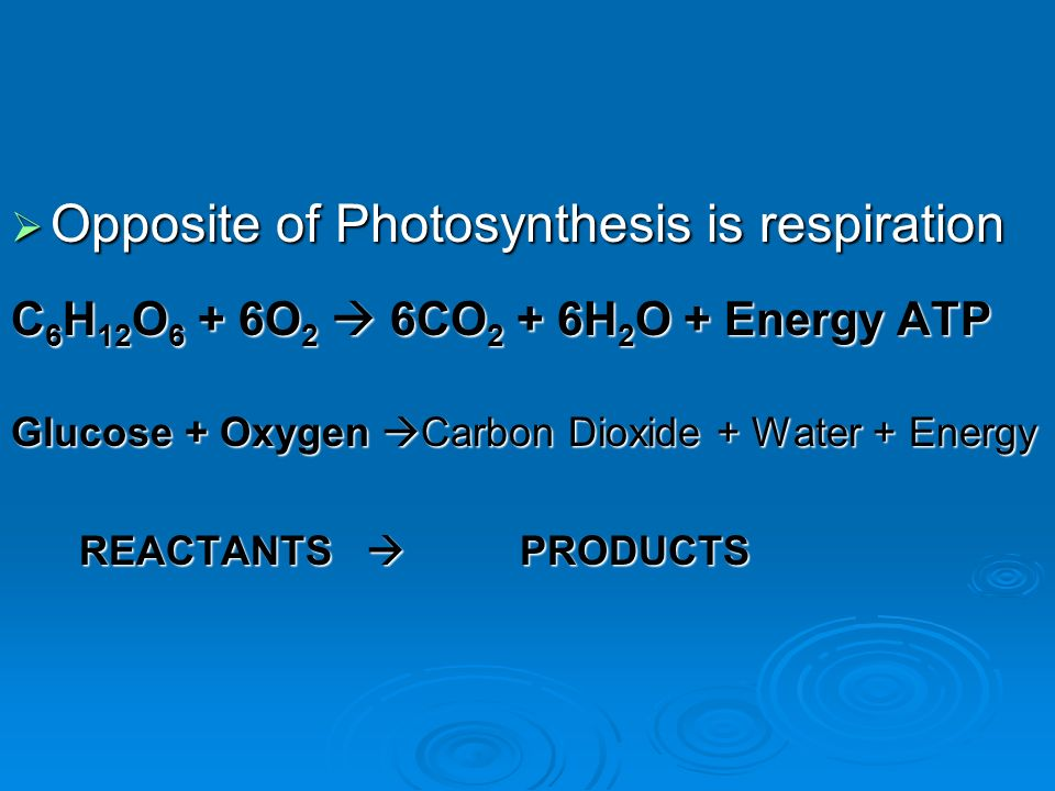  Opposite of Photosynthesis is respiration C 6 H 12 O 6 + 6O 2  6CO 2 + 6H 2 O + Energy ATP Glucose + Oxygen  Carbon Dioxide + Water + Energy REACTANTS  PRODUCTS REACTANTS  PRODUCTS