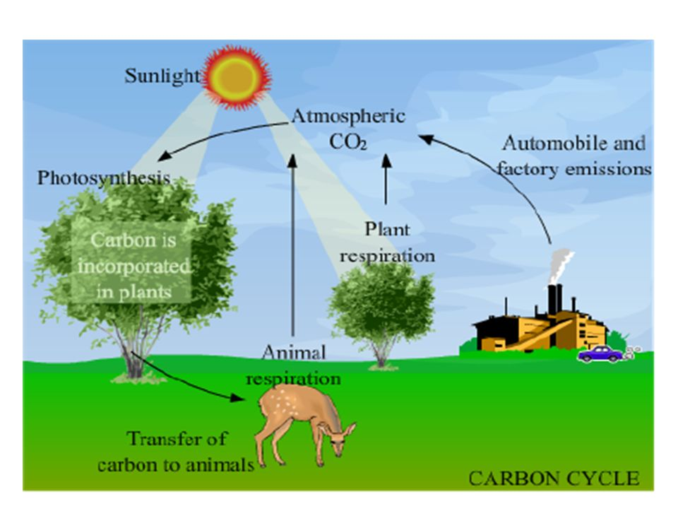 Carbon oxygen cycle etamemibawa carbon oxygen cycle ccuart Choice Image