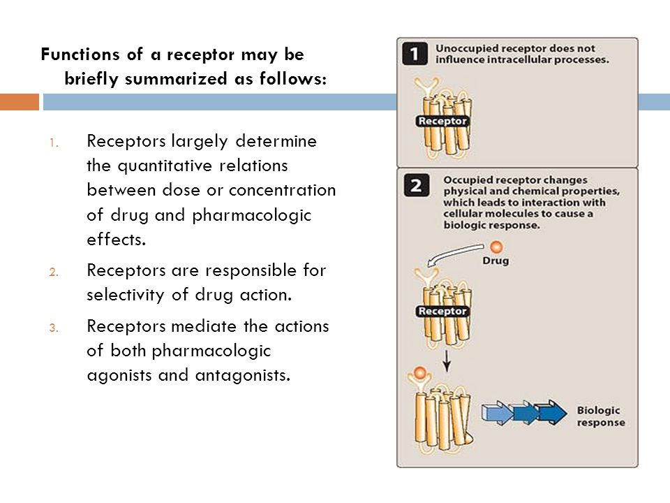 methylprednisolone prednisone
