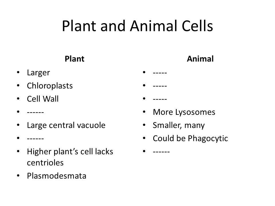 Plant Anatomy Worksheet Worksheet – Plant Anatomy Worksheet