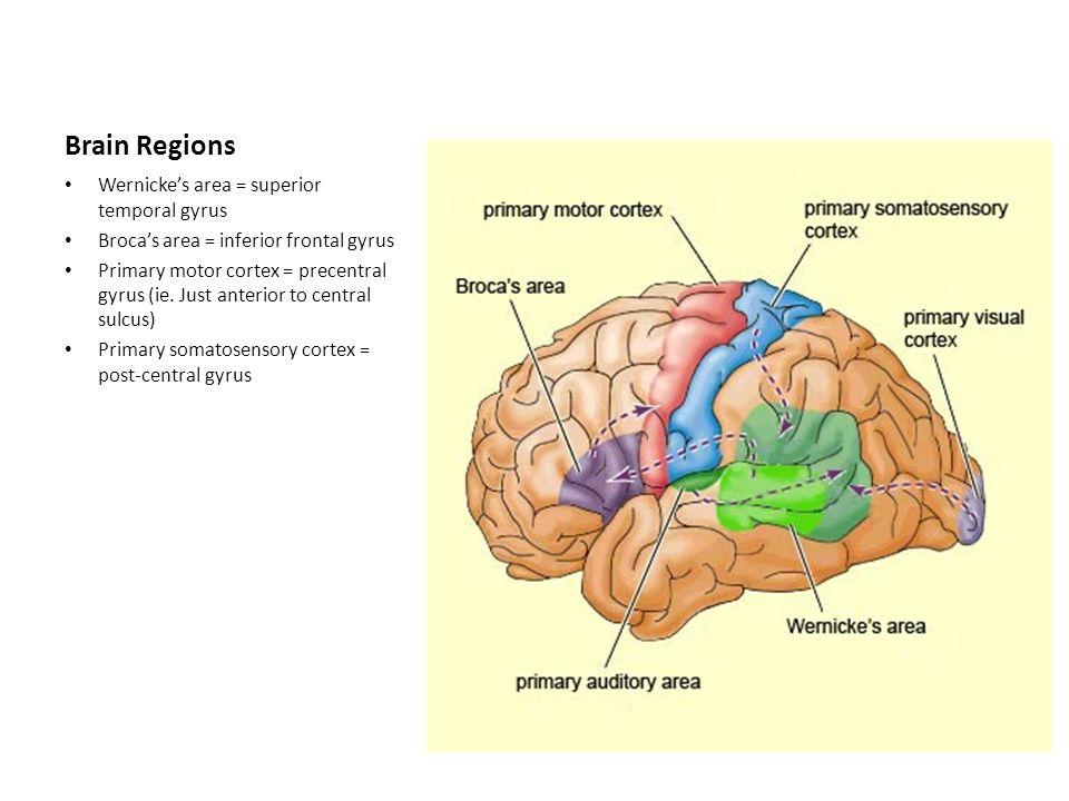 The Brain Stroke Frontal Lobe Function Planning Organisation