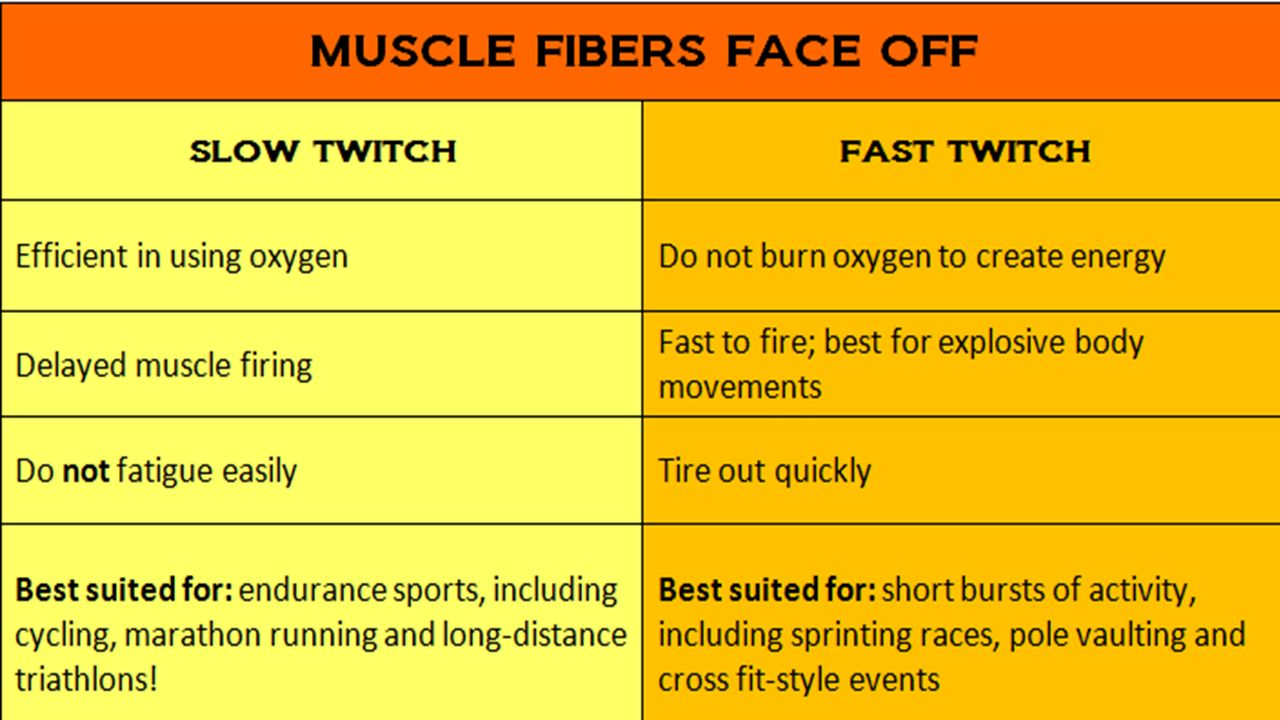 simple muscle twitch observations